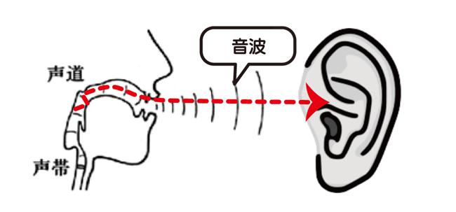 難聴と音の伝わり音波