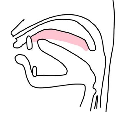 構音障害の原因
